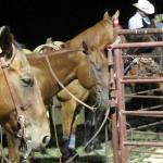 Family Ranch Rodeo